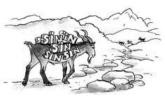 Le bouc émissaire, c'est celui qui prend pour tout le monde. Mais comment en est-on arrivé à charger la mule, ou plutôt ce pauvre bouc ?