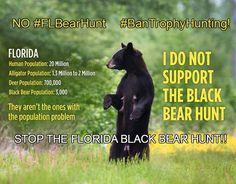 Please Tweet & Share to Help Stop the Florida Bear Hunt