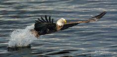 Birds in Flight Photography