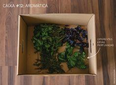 Caixa #12: Aromática Um punhado de manjericão verde, algumas folhas de manjericão roxo, hortelã, alecrim. Tudo fresquinho e devidamente higienizado para presentear o olfato e o paladar dos pequenos.
