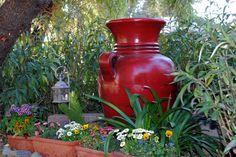 5 tips for gardening in Phoenix / desert.