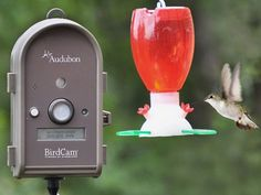 Nature Camera from Wingscapes