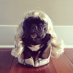 dog-costumes-trotter-4