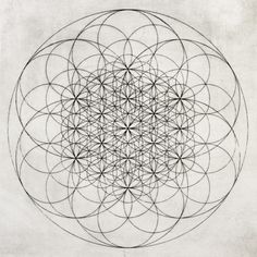 #mandala flower of life