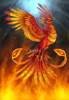 The phoenix for the month of July. The Phoenix of July Real Phoenix Bird, Phoenix Dragon, Phoenix Bird Tattoos, Phoenix Art, Phoenix Rising, Magical Creatures, Fantasy Creatures, Phoenix Images, Flame Art