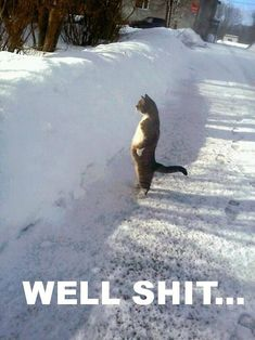 lollllllllllllllllllllllfest (cat,funny,lol,snow,bank)