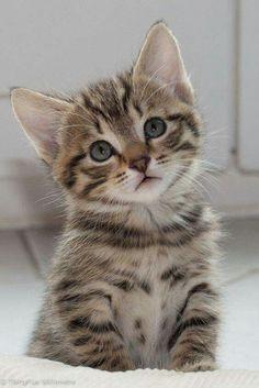 Awww pondering his cuteness