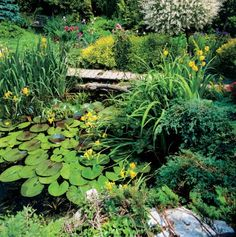garden pond - China