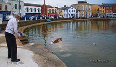 Dog gone at the Crescent by John Stewart Wexford Ireland, John Stewart, Gem, Places To Visit, Beautiful, Jewels, Gemstone, Gemstones, Jon Stewart
