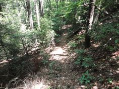 Hiking the Cohutta Wilderness