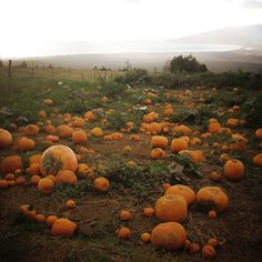 I can almost smell the clean dirt in the light mist. I can almost smell the clean dirt in the light mist. October Country, Over The Garden Wall, Autumn Aesthetic, Autumn Cozy, Fall Pictures, Autumn Garden, Fall Halloween, Halloween Pumpkins, Fall Pumpkins