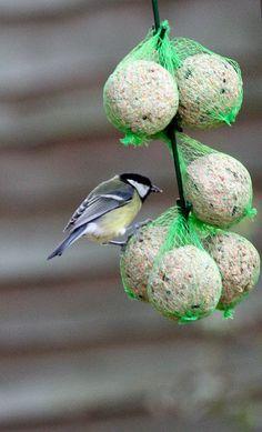 New garden for breakfast | Not had a bird friendly garden ti… | Flickr