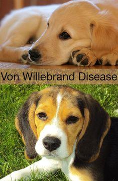 Natural Treatment For Von Willebrand Disease