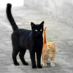 😺🐾🧡🧡🧡 Fotografía de gatos, ideas para fotos 📸 y hallazgos 💡 - Katzen - Pretty Cats, Beautiful Cats, Animals Beautiful, Cute Kittens, Cats And Kittens, Ragdoll Kittens, Tabby Cats, Bengal Cats, Baby Animals