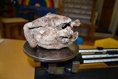 Mummified chicken