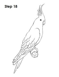 How to Draw a Cockatiel Bird Drawings, Easy Drawings, Animal Drawings, Bird Coloring Pages, Adult Coloring Pages, Parrot Drawing, Pencil Drawings For Beginners, Bird Template, Disney Princess Coloring Pages