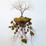 Suspended Tree Sculptures Connect an Artist to His Cuban Roots