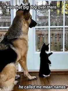 les 158 meilleures images du tableau chats rigolos sur pinterest chien chat animaux et. Black Bedroom Furniture Sets. Home Design Ideas