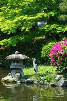 Maruyama park in Kyoto AN AUTHENTIC JAPANESE GARDEN...love my Japanese Maple Tree via flickr  X  X  X  BellaDonnaLuxeDesigns