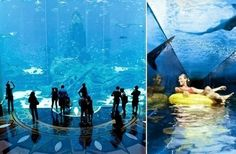 Atlantis, The Palm is a six-star resort located at Palm Jumeirah in Dubai. Designed around the ancient mythology of Atlantis, the resort features the elaborate Lost Chambers maze and the Aquaventure water park. The Lost Chambers is a series of underwater hallways and tunnels with giant windows onto an aquarium with over 65,000 marine creatures. Shark Attack is a water ride through the centre of the aquarium. #dubai #uae