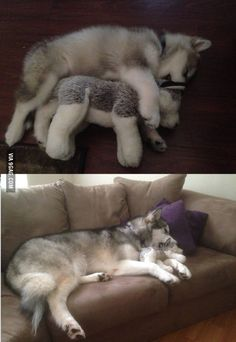 Then vs Now (He destroyed all his stuffed animals except this one)