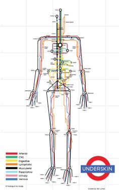 The human body, mapped out in the style of the London Tube system. veryyyy creative.