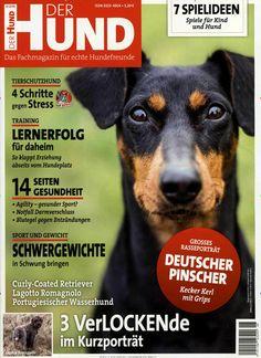 Deutscher Pinscher.