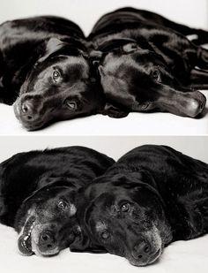 Um projecto fotográfico que mostra o envelhecimento de alguns cães maravilhosos. - Chiado Magazine
