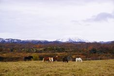 Iceland In The Fall - Backpack Globetrotter Fire And Ice, Wild Horses, Iceland, Mountains, Backpack, Travel, Ice Land, Bag Pack, Voyage