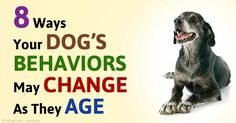 Physical changes are just one sign that your dog is getting older, but there can also be changes in behavior you'll want to be prepared for. http://healthypets.mercola.com/sites/healthypets/archive/2015/06/15/aging-dog-behavior-changes.aspx