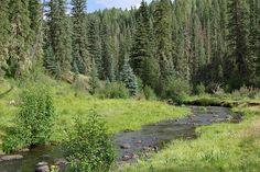 Black River in White Mountains, AZ
