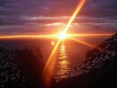 Sleeping gannets on the Bass Rock at sunset