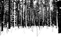 Name: High Contrast Forest Photographer: IlluminousPhotos. This photo is high contrast, there is only black and white tones in this. This could be either high or low key since it uses both the dark tones and the light tones. The photo is in black and white which makes this image stronger and more mysterious.