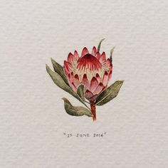 Day 176 : Robijn Protea - tiny watercolour | 365 Paintings For Ants / Lorraine Loots