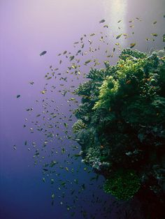 Coral reef, Red Sea - Just plain beautiful! Deep Blue Sea, Red Sea, Paradis Tropical, Life Under The Sea, Beneath The Sea, Foto Real, Life Aquatic, Underwater Life, Sea And Ocean