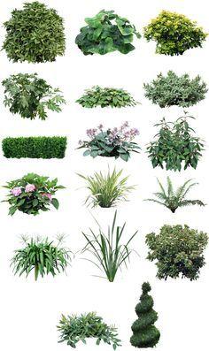 생각 나눔 :: Plants in PSD