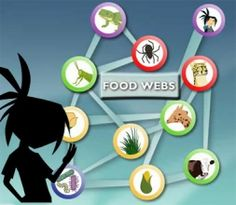 Introduce 11 ecosystem-related topics, including food webs, symbiosis, and the water cycle, with these interactive activities. Science Resources, Science Lessons, Science Education, Science Activities, Interactive Activities, Life Science, Science Ideas, Food Chain Activities, Ecosystem Activities
