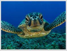 #SalvaTuNido protegiendo a las tortugas marinas en la Riviera Maya México.