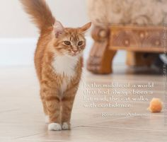 Live in a world that's hectic and crazy? Best advice to get through it all - act like a cat... #wordlesswednesday