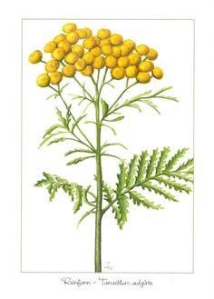 Blomekort Åshild Hansejordet - Reinfann - Handlenett Journaling, Plants, Caro Diario, Plant, Planets