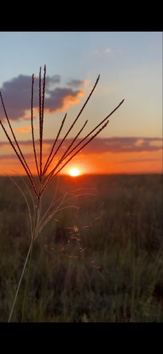 Africa, Sunset, Places, Nature, Photos, Naturaleza, Pictures, Sunsets, Nature Illustration