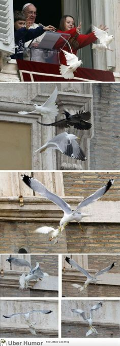 Pope's Dove of Peace Attacked by Seagull Again - http://limk.com/news/popes-dove-of-peace-attacked-by-seagull-again-071392655/