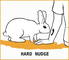 Rabbit Body Language: An Illustrated Guide Rabbit Run, Silly Rabbit, Pet Rabbit, Rabbit Anatomy, Rabbit Facts, Guinea Pig Care, Guinea Pigs, Rabbit Behavior, Holland Lop Bunnies