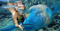 Cairns Combo: Great Barrier Reef Cruise and Kuranda Day Trip in Australia Pacific Ocean and Australia Great Barrier Reef Tours, Great Barrier Reef Snorkeling, Snorkeling Maui, Whatsapp Info, Snorkelling, Ocean Life, Australia Travel, Western Australia, Marine Life