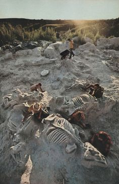 National Geographic, January 1981 archeologists after discovery of fossil field