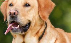 Departamento de Agricultura dos EUA remove todos os relatórios sobre bem-estar animal