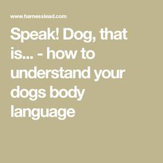 Speak! Dog, that is... - how to understand your dogs body language