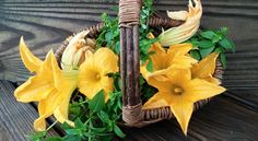 Harvesting squash blossoms...July 3, 2015