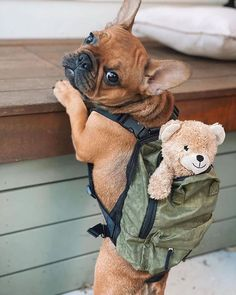 'design french bulldog' by Super Cute Puppies, Cute Baby Dogs, Cute Little Puppies, Cute Dogs And Puppies, Cute Little Animals, Cute Funny Animals, Doggies, Cute French Bulldog, French Bulldog Puppies