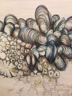 Julia Wright Jewellery: Natural forms drawing, mussel shell